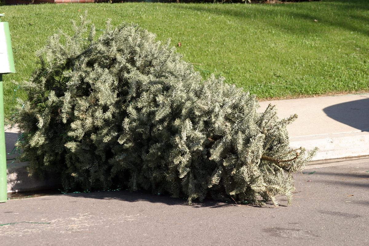 Tossing out a christmas tree