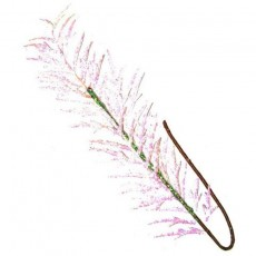 Irridescent Whitre Glitered Fern Leaf 60Cm