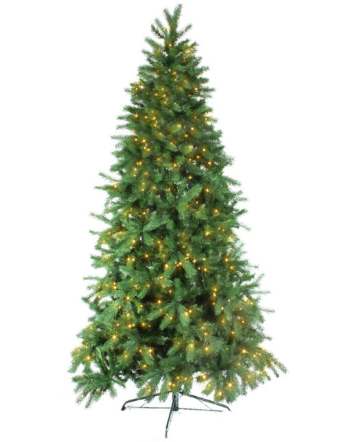 Fraser Fir 240Cm Warm White Led