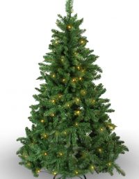 #268 Imperial Pine 100 WW LED 150cm